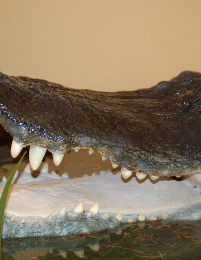 gator (2)