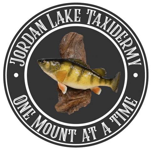 Jordan Lake Taxidermy
